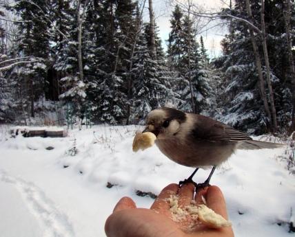 Ralph having a snack.